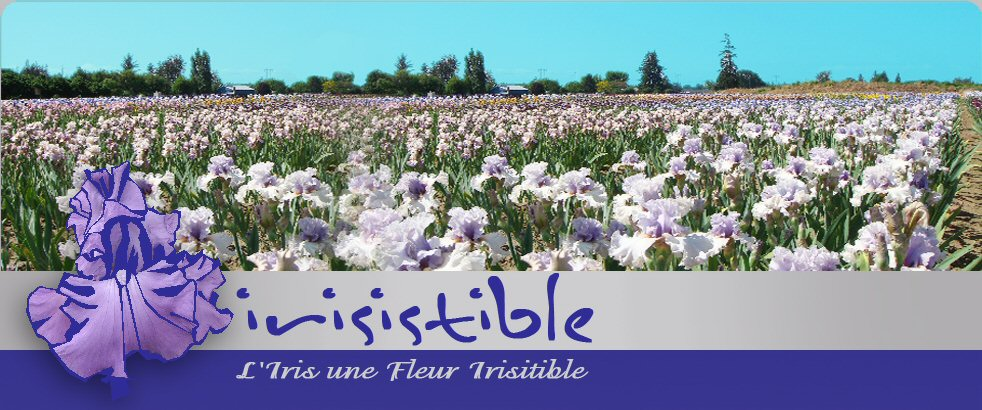 Irisistible, la passion des Iris : Culture des iris avec film de paillage : alternative au désherbage ou aux désherbants