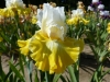 Les plus beaux Iris